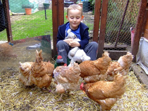 My lad with our beautiful rescued hens.