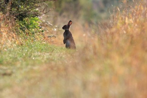 Terrible. Fancy shooting a rabbit that's lived in freedom and happiness.